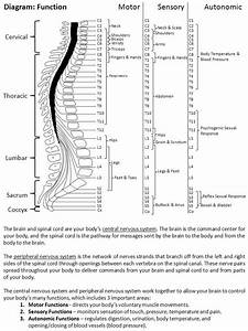 What Is A Spinal Cord Injury