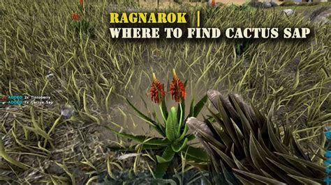 Ark Ragnarok  Where To Find Cactus Sap !  Youtube. Types Of Spinal Fusion Surgery. Carpet Cleaning New York School Of Engineering. Car Rental Europe One Way New York Bankruptcy. Cloud Phone Service For Business. Photography Programs Online El Dorado Tile. Nursing Schools In Austin Tx No Cost Heloc. Peoplenet Fleet Management Is Lipo Laser Safe. Biomedical Engineering Schools In Texas