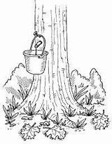 Maple Syrup Tree Coloring Activities Pages Homemade Sugaring Drawing Sugar Tap Crafts Sucre Preschool Sap Taps Colouring Sheets Cabane Printables sketch template