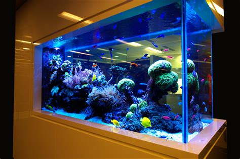 fish aquariums aquariums ponds design installation best delhi