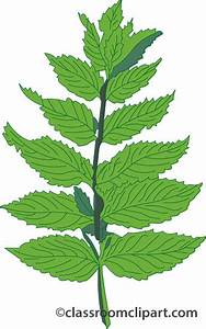 Herb Clipart - Clipart Suggest