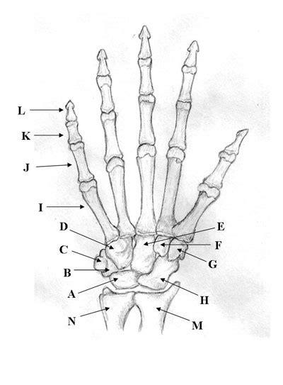 bones   upper limb proprofs quiz