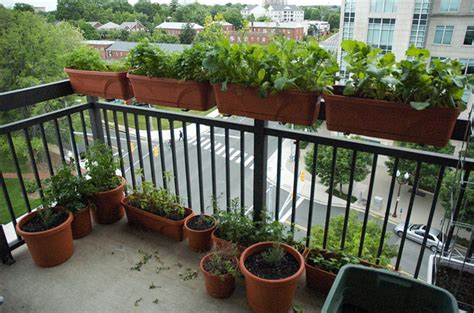 Watering Balcony Herb Garden Ideas