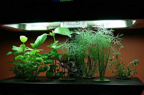 Hydroponics-easy Indoor Gardening