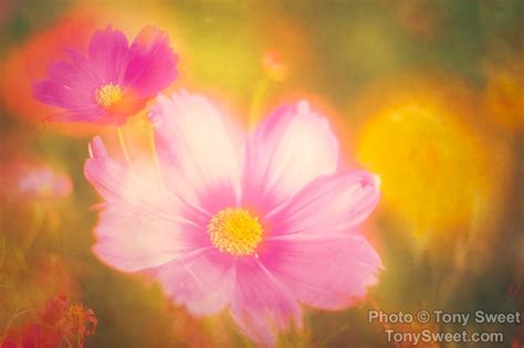 great   flower photography book  tony sweet
