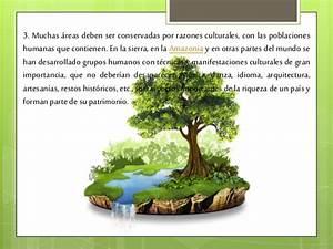 cuidado y conservacion del medio ambiente
