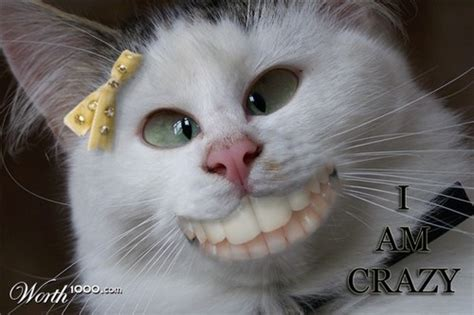 Crazycat (@craaaaazycat) Twitter