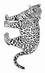 Dessin Jaguar Facile : imprime le dessin colorier de jaguar ~ Maxctalentgroup.com Avis de Voitures