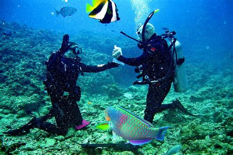 Ko Tao Dive by Koh Tao Diving Everything You Need To
