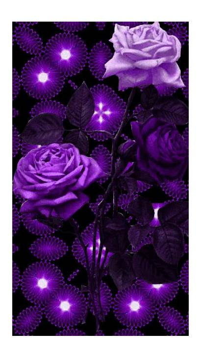Purple Roses Rose Flowers Flower Butterfly Animated