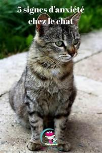 Laver Un Chaton : pingl par bm sur chat pinterest chat chien chat et ~ Nature-et-papiers.com Idées de Décoration