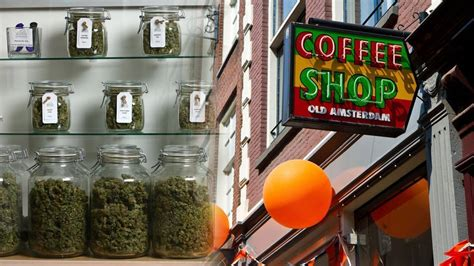 tips for buying in amsterdam green daily