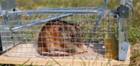 piege a rat fait maison piege rat taupier sur la