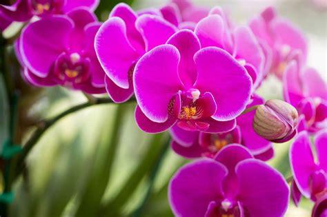 Perché non riempirla di gioia e di emozioni regalandole un bel bouquet di fiori colorati? Fiori per compleanno: a ciascuno il suo