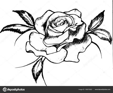 Desenho preto e branco de uma rosa Rosa é um símbolo de