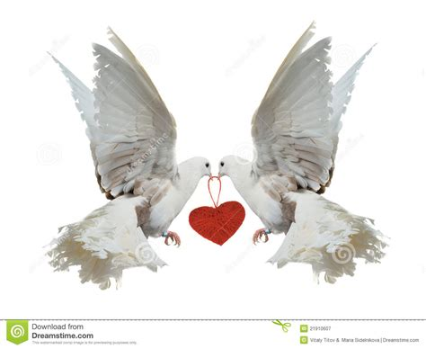 white doves holding red heart   beaks stock