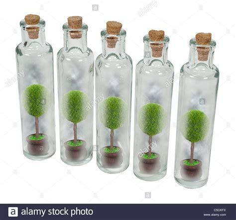 vasi e bottiglie di vetro natura conservata in vasi mostrati da alberi in singoli