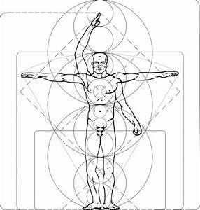 Vitruvian Man clip art Free Vector / 4Vector