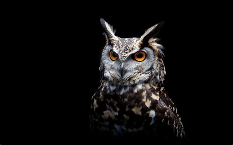 Black Owl Wallpapers by Owl Black Background Wallpaper Animals Wallpaper Better