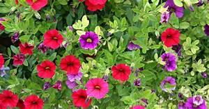 Garten Im März : terrasse und balkon die besten tipps im m rz mein ~ Lizthompson.info Haus und Dekorationen