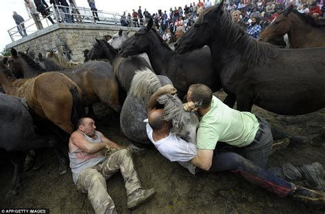 ultimate contest  strength  incredible wrestling matches  wild horses