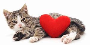 How to Have a Safe and Happy Valentine's Day with Your Cat