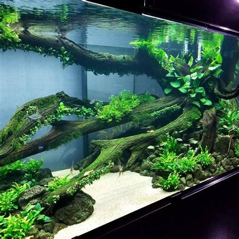 Oliver Knott Aquascaping - oliver knott made in china 5 meter tank in zhengzhou