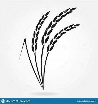 Rice Symbol Wheat Vector Crop Grain Agriculture