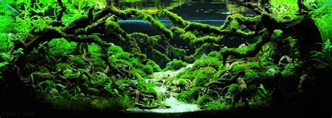 Aquascaping Layouts by The Top 10 Most Beautiful Freshwater Aquascapes Of 2012