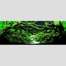 The Top 10 Most Beautiful Freshwater Aquascapes Of 2012