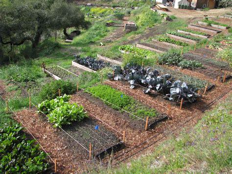 remarkable design home vegetable garden ideas gardening