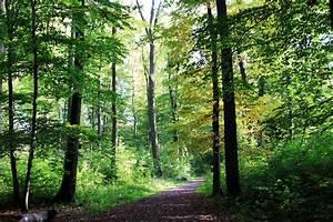 Bilder Bäume Gemalt : wald wie gemalt foto bild jahreszeiten herbst natur bilder auf fotocommunity ~ Orissabook.com Haus und Dekorationen