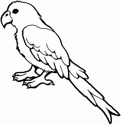 Parrot Coloring Pages Bird Animals Macaw Drawing