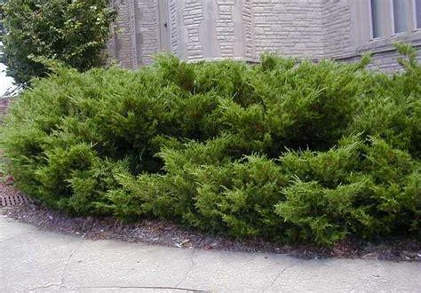 name of shrub top 28 shrub name evergreen shrubs evergreen shrubs get their name fro flowering shrubs