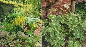 Gazon Pour L Ombre : plantes qui peuvent pousser l 39 ombre mon jardin ma maison ~ Premium-room.com Idées de Décoration