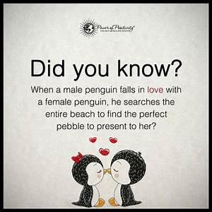 Penguin Love Quotes Poems | www.pixshark.com - Images ...