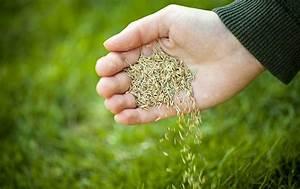Quand Semer Du Gazon : semer du gazon ~ Dailycaller-alerts.com Idées de Décoration