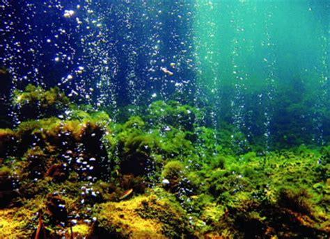 Harmonious Ocean Floor Diagram Designs