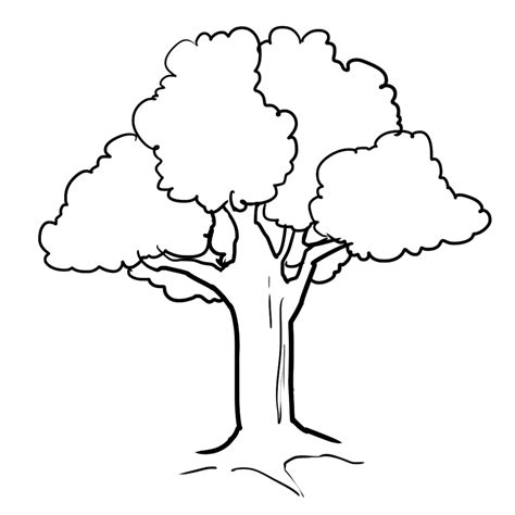 Coloring Tree by Tree Clipart Black And White Png