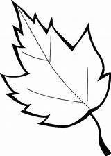Leaf Coloring Leaves Printable Holly Pages Maple Oak Marijuana Template Sugar Printables Sheet Leafs Drawing Getcolorings Clipartmag Autumn Templates Pile sketch template