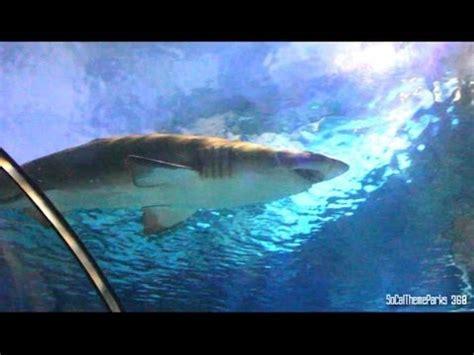 Close Shark Encounter Tunnel Seaworld