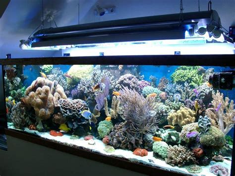 d 233 coration aquarium recifal occasion metz 12 aquarium