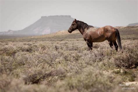 dangerous wild horse plan american campaign