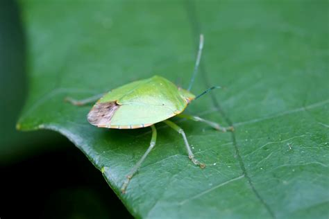 Garden Bugs by Pest Informations And Diy Guides Just Another