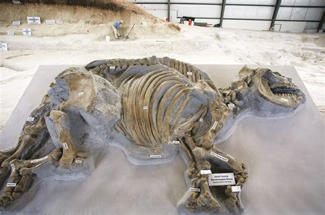 ashfall fossil beds state historical park ashfall fossil beds state historical park nebraska