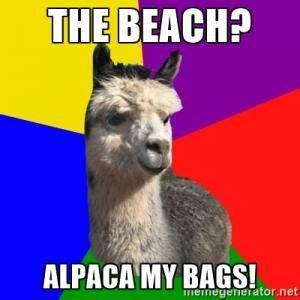Alpaca My Bags Meme - 109 best images about alpaca on pinterest llama arts funny llama and originals