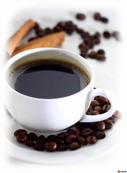 Coffee Biz 2470 Fx Cc Torange Cup