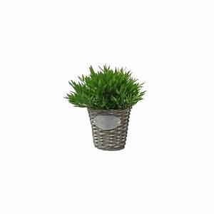Cache Pot Plante : bambou d 39 int rieur 30 cm cache pot vintage plantes et jardins ~ Teatrodelosmanantiales.com Idées de Décoration