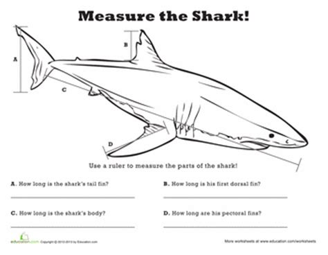 Measure Length Shark!  Fourth Grade Education Materials  Measurement Worksheets, Math
