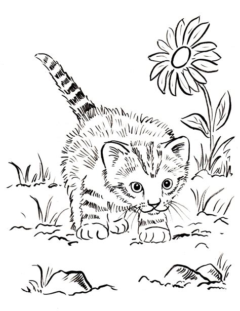 kitten coloring page samantha bell